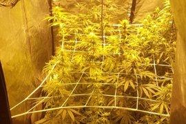 Detenidos tres hombres tras el hallazgo de 4 kilos de marihuana plantada en armarios
