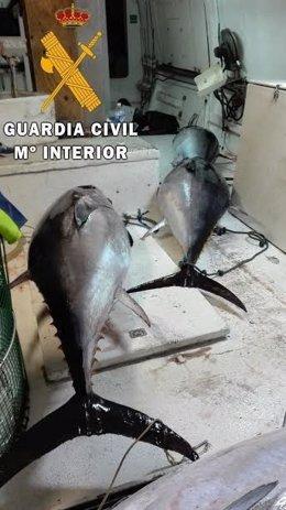 Atunes intervenidos en el puerto de Roquetas de Mar