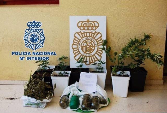 """Nota De Prensa """"La Policía Nacional Halla Una Plantación Clandestina De Marihuan"""