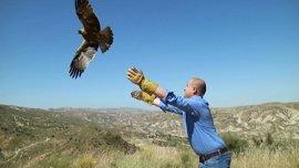 Junta libera en Almería un águila culebrera y un águila calzada tras recuperarse de sus lesiones