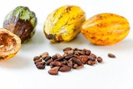 El cacao tiene un efecto protector sobre el sistema cardiovascular y la enfermedad coronaria