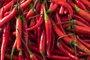 Foto: El chile rojo puede ayudar a tratar la obesidad