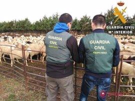 La Guardia Civil detiene a dos personas por varios delitos de hurto de ganado