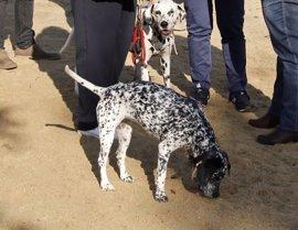 Un 19% de los perros de la Comunidad de Madrid tiene seguro, según Rastreator