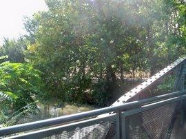 El Canal Imperial recibe aportaciones desde La Loteta ante el bajo caudal del eje del Ebro