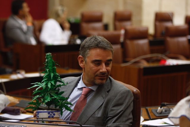 Moreno Yagüe con la planta de cannabis en el salón de plenos