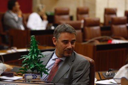 El Parlamento andaluz rechaza pedir la regulación del cannabis en sus usos medicinales, terapéuticos y de ocio