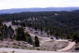 """La Plataforma Forestal advierte que los montes serán """"un polvorín"""" este verano"""