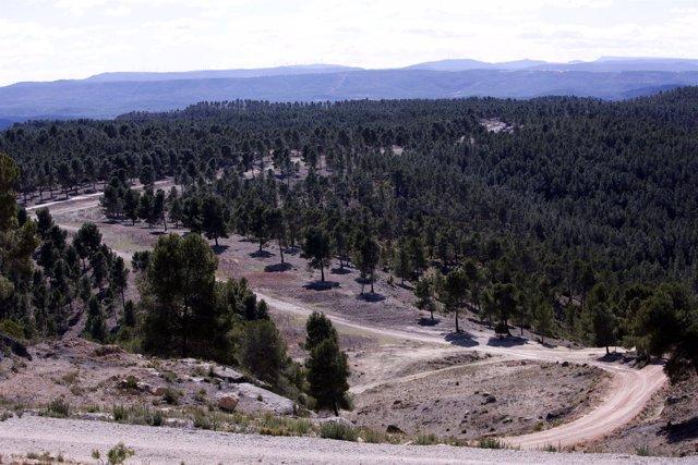 Terreno forestal en la Comunitat Valenciana