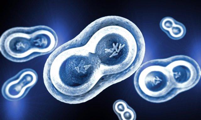 Una nueva forma de frenar el crecimiento de células cancerosas
