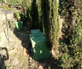 Un detenido por la sustracción de 75 colmenas de una asentamiento en la zona de la Peña de Tarifa