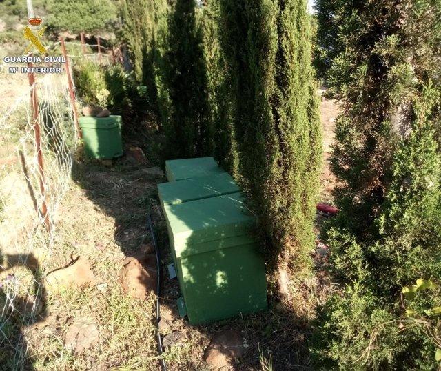 Colmenas robadas en Tarifa
