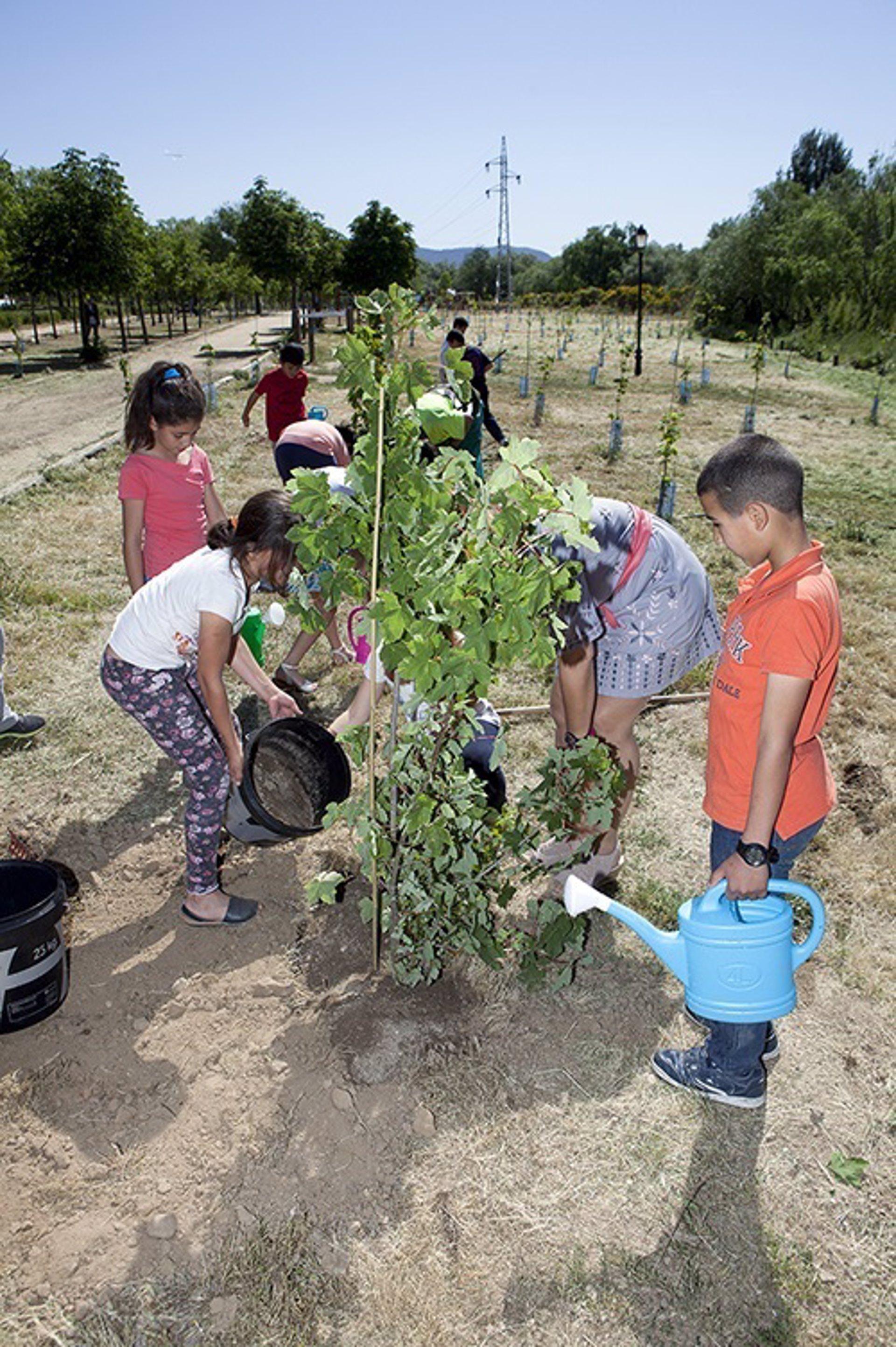 Plantan rboles en dos zonas verdes de villalba for Calle prado manzano collado villalba