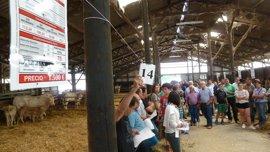 Diputación de Bizkaia subasta 51 cabezas de ganado del programa de selección y mejora genética en granjas forales