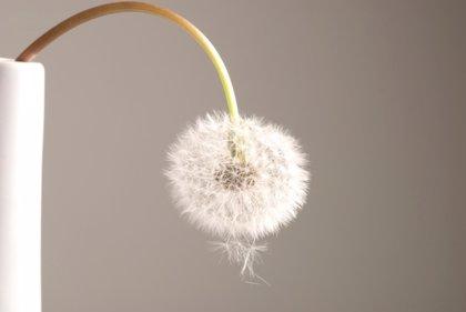 Diez claves sobre la disfunción eréctil: atención al síntoma centinela