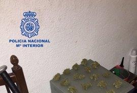 Tres detenidos en Ruzafa por cultivar marihuana y golpear con un bate de béisbol a un policía