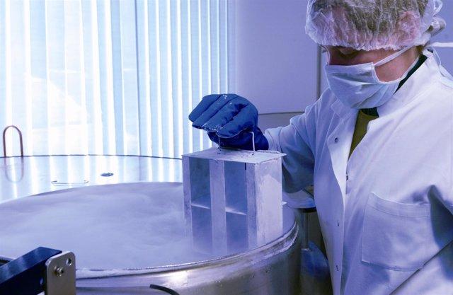 Tanque de criogenización, criocord, celúlas cordón umbilical
