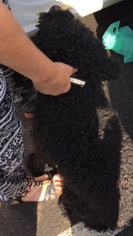 El perro de agua tras ser rescatados por la Policía Local.