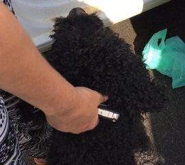 La Policía de Utrera (Sevilla) denuncia a una mujer por dejar encerrado en su coche a un perro a pleno sol