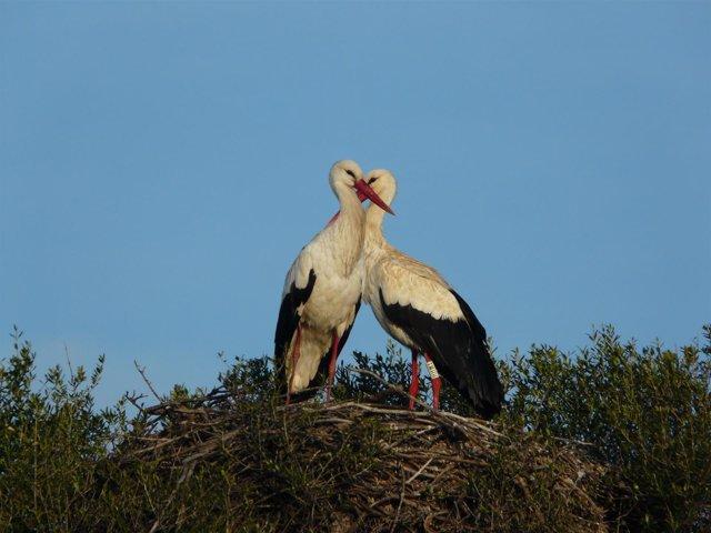 Cigüenas en el Parque Natural de Doñana