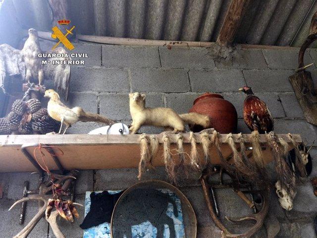 Animales disecados