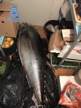 Atún rojo málaga marbella decomiso pesca 111 kilos puerto banús furtivo pesca