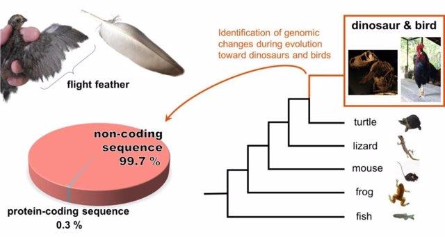 Cambios genómicos en la evolución hacia dinosaurios y pájaros
