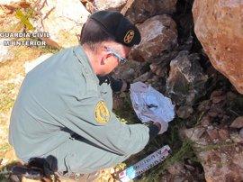 Un detenido por usar veneno camuflado en sardinas para proteger a naranjos de animales