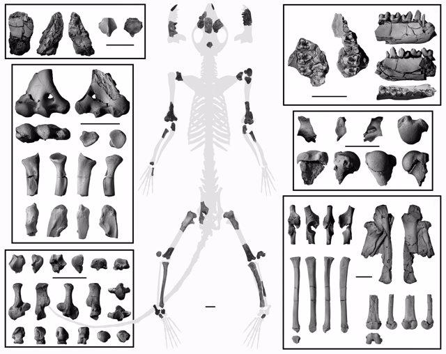 Esqueleto de Torrejonia