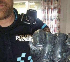 La Policía captura una culebra de escalera en un aula de un colegio de Fuenlabrada