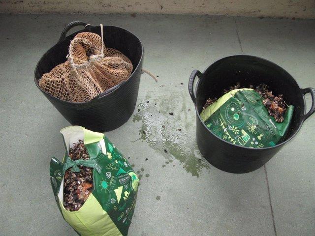 Interceptados 42 kilos de percebe de extracción ilegal en Arteixo