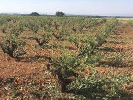 """Las tormentas de agua y piedra dejan """"graves daños"""" en varios municipios de la provincia de Albacete, según Asaja"""