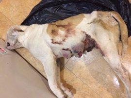 Detenido un individuo por abandono y maltrato de una perra que murió