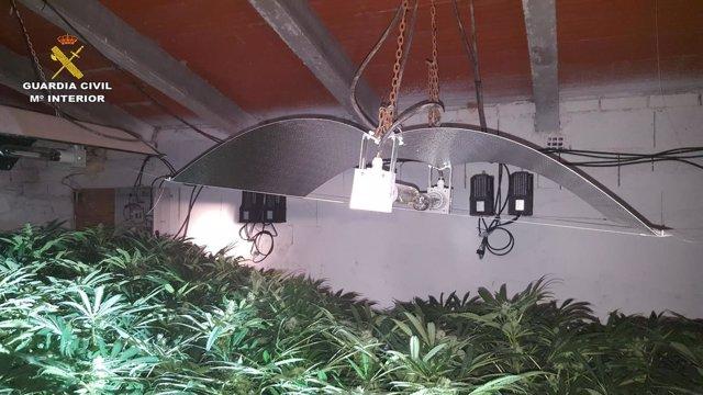 Plantación indoor