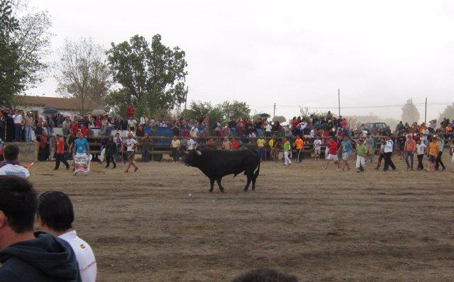 Toro de la Peña 2016 en Tordesillas