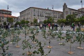 Plantación simbólica de eucalipto en Pontevedra para pedir que se frene su expansión