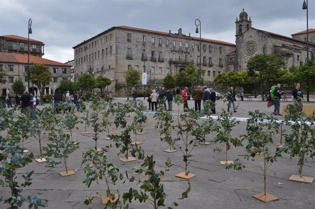 Plantación simbólica de eucaliptos en Pontevedra