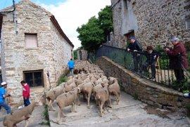 Somos Trashumantes' permite acompañar a las ovejas en las Tierras Altas de Soria
