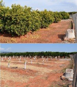 Parcelas con árboles ilegales investigados por Orri Running Committee