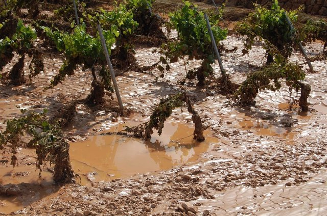 Daños por temporal, lluvia, pedrisco, granizo, agricultura.