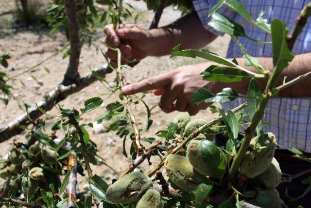 Visita Cultivos Afectado Temporal Caravaca