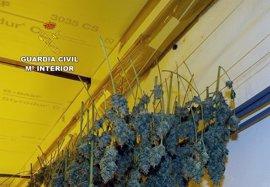 Desmantelado un punto de cultivo, elaboración y distribución de droga al menudeo en El Albujón-Cartagena