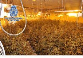 La Policía Nacional interviene en Vélez-Málaga 600 plantas de marihuana y detiene a dos personas