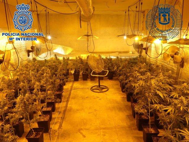 Producción de marihuana