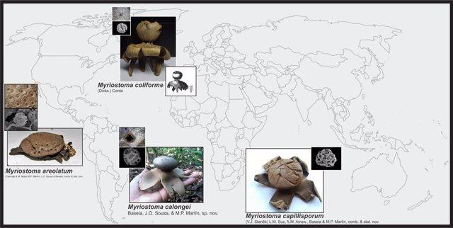 Mapa de las nuevos hongos descritos en Argentina y Brasil