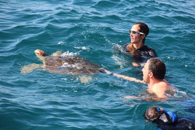 Elías Bendodo participa en la suelta de tortuga marina  tratada aula del mar