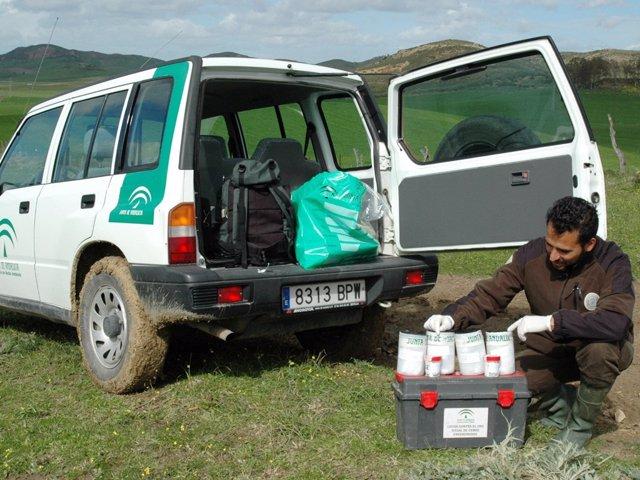 Agentes de medio ambiente con cebos envenenados