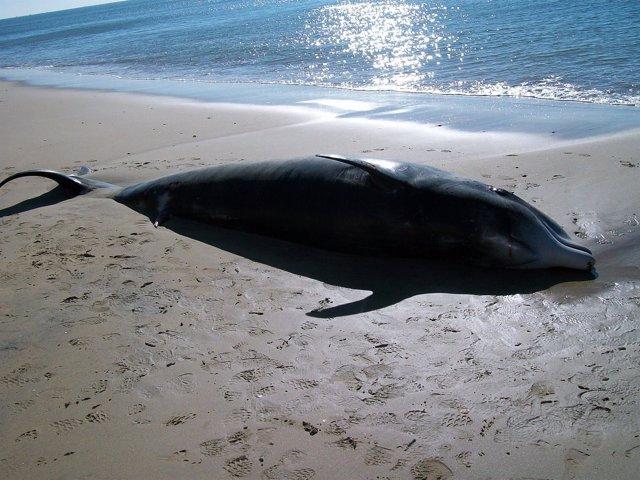 La Junta organiza talleres para atender varamientos de cetáceos y tortugas