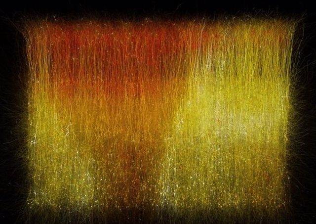 Patrones ocultors de actividad cerebral