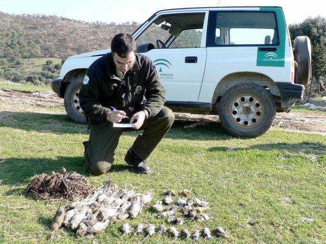 Agentes de Medio Ambiente de la Junta de Andalucía